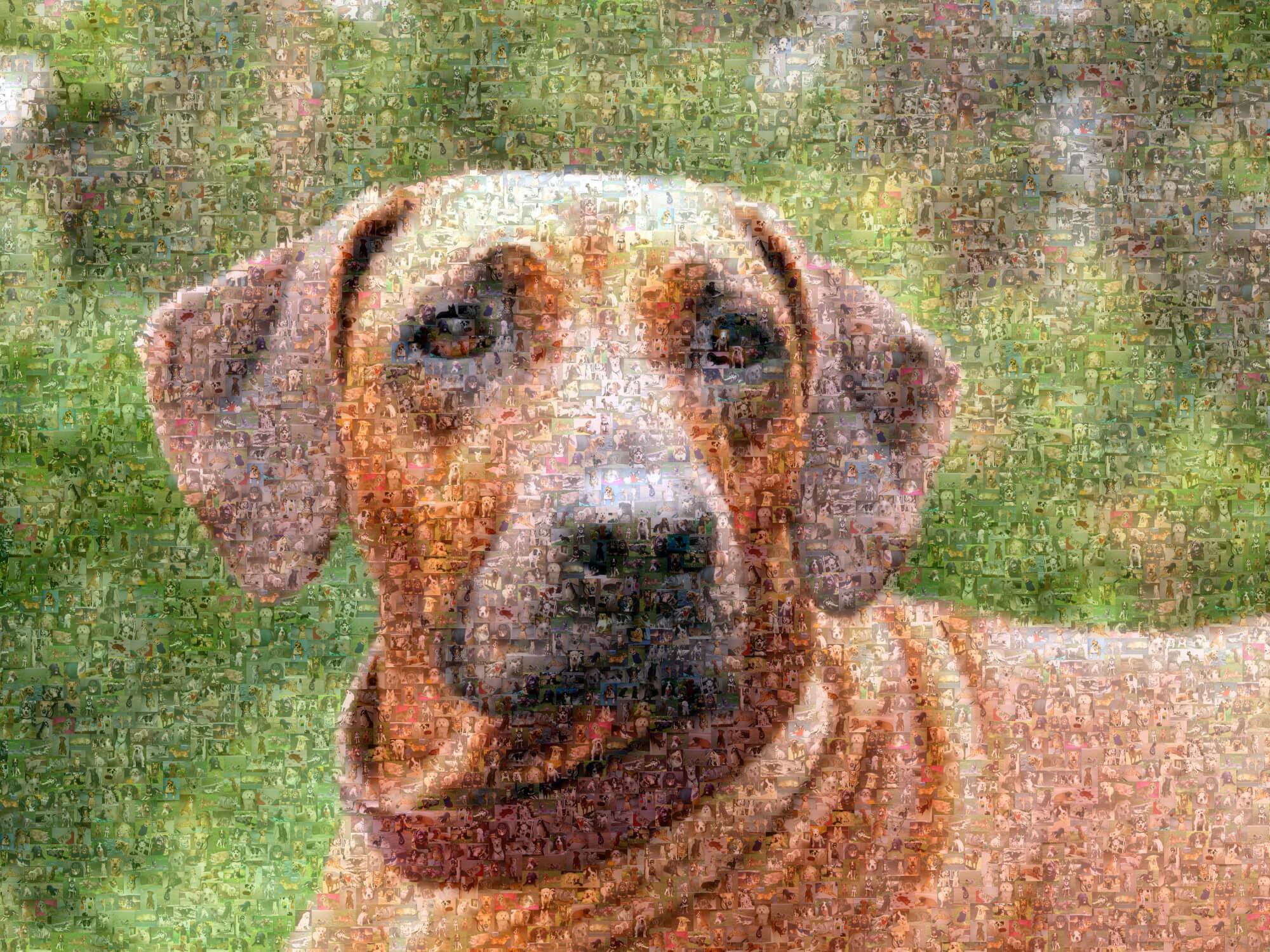 Fotomosaik von einem Hund